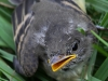 PPL Wetlands birds  (11 of 29)