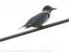 PPL Wetlands birds  (12 of 29)