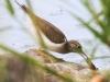 PPL Wetlands birds  (14 of 29)