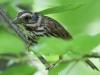 PPL Wetlands birds  (17 of 29)