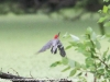 PPL Wetlands birds  (2 of 29)