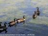 PPL Wetlands birds  (20 of 29)