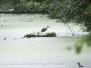 PPL Wetlands birds  (6 of 29)