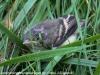 PPL Wetlands birds  (7 of 29)