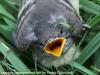 PPL Wetlands birds  (8 of 29)