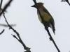 PPL Wetlands birds -065