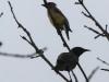 PPL Wetlands birds -074