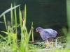 PPL Wetlands birds -079