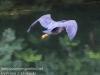 PPL Wetlands birds -080