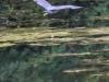 PPL Wetlands birds -082
