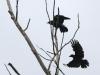 PPL Wetlands birds -085