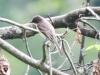 PPL Wetlands birds -118