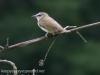 PPL Wetlands birds -119