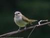PPL Wetlands birds -120