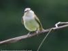 PPL Wetlands birds -121