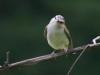 PPL Wetlands birds -123