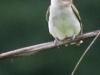 PPL Wetlands birds -124