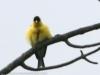 PPL Wetlands birds -135