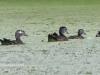 PPL Wetlands birds -161