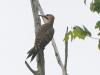PPL Wetlands birds -168