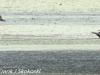 PPl Wetlands birds  (1 of 26)