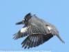 PPl Wetlands birds  (11 of 26)