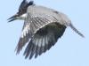 PPl Wetlands birds  (12 of 26)