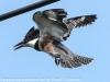 PPl Wetlands birds  (13 of 26)