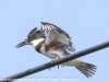 PPl Wetlands birds  (14 of 26)