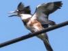 PPl Wetlands birds  (15 of 26)