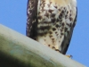 PPl Wetlands birds  (17 of 26)