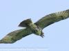PPl Wetlands birds  (19 of 26)