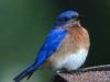 PPl Wetlands birds  (2 of 26)