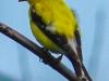 PPl Wetlands birds  (20 of 26)