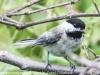 PPl Wetlands birds  (21 of 26)