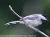 PPl Wetlands birds  (22 of 26)