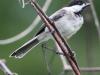 PPl Wetlands birds  (23 of 26)