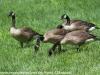 PPl Wetlands birds  (24 of 26)