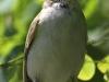 PPl Wetlands birds  (25 of 26)