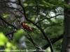 PPl Wetlands birds  (3 of 26)