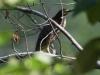 PPl Wetlands birds  (4 of 26)