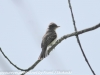 PPl Wetlands birds  (6 of 26)