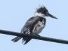 PPl Wetlands birds  (7 of 26)