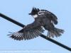 PPl Wetlands birds  (8 of 26)