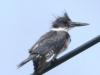 PPl Wetlands birds  (9 of 26)