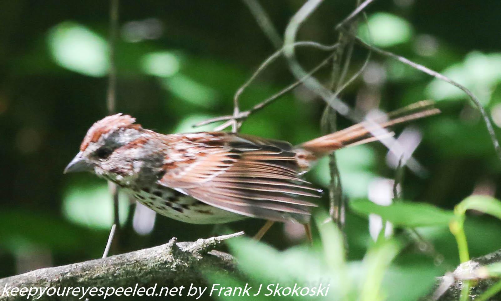 PPl Wetlands birds  (2 of 40)