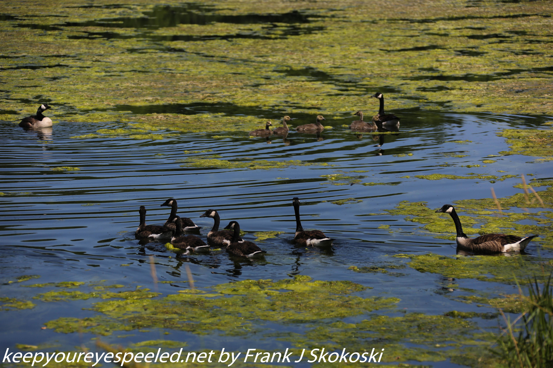 PPl Wetlands birds  (20 of 40)