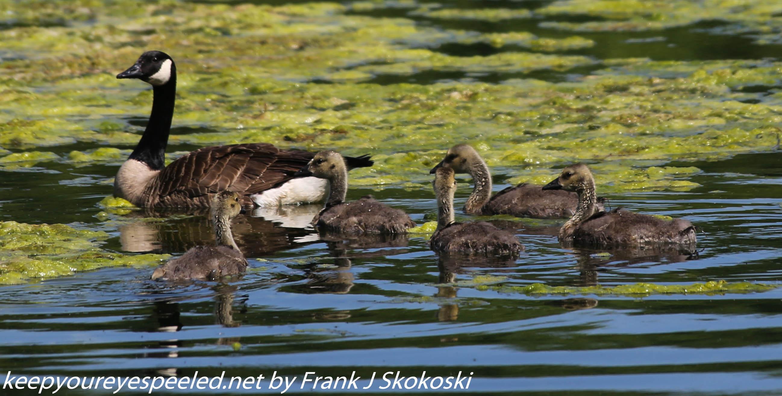 PPl Wetlands birds  (22 of 40)