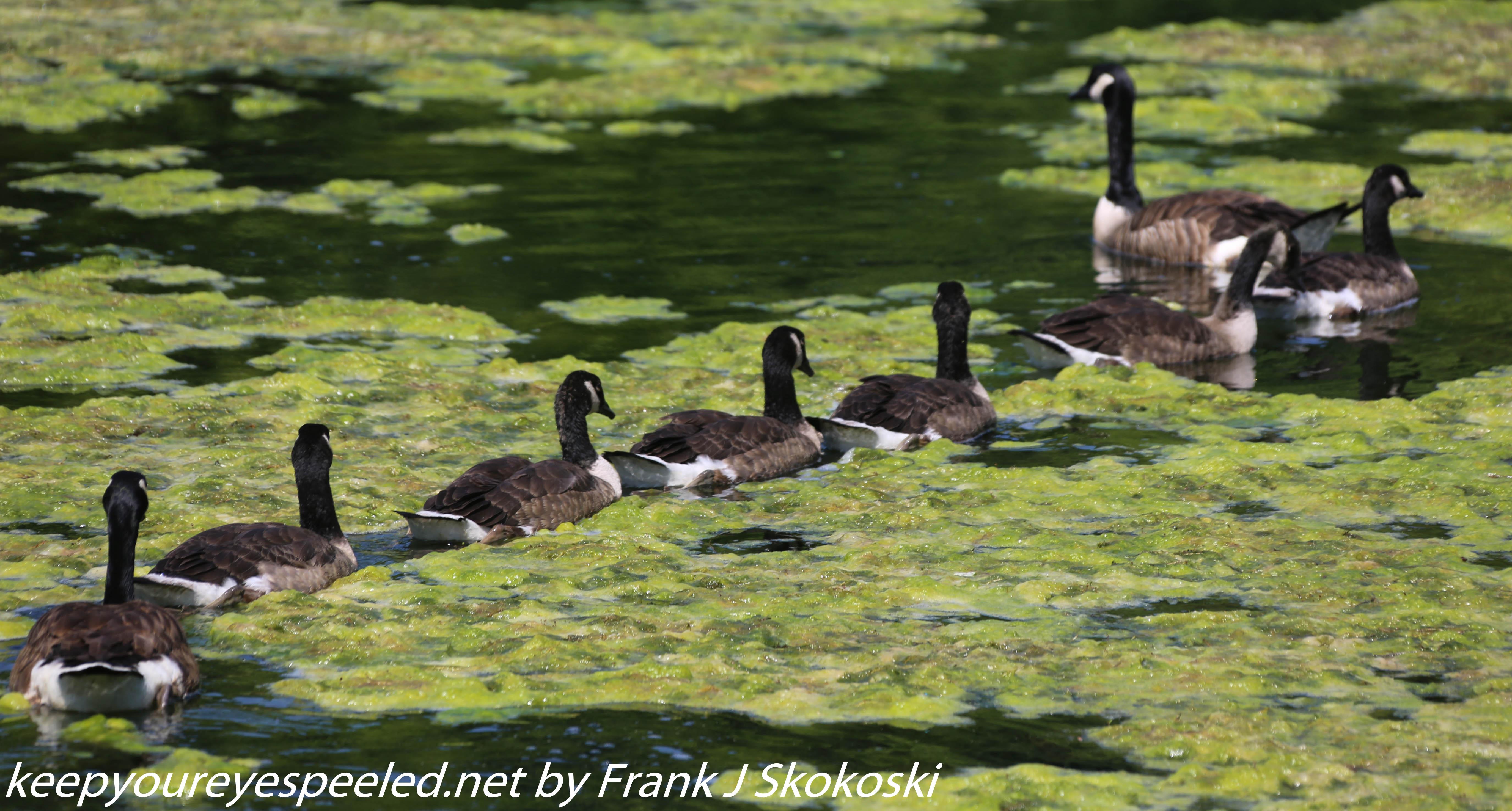 PPl Wetlands birds  (26 of 40)