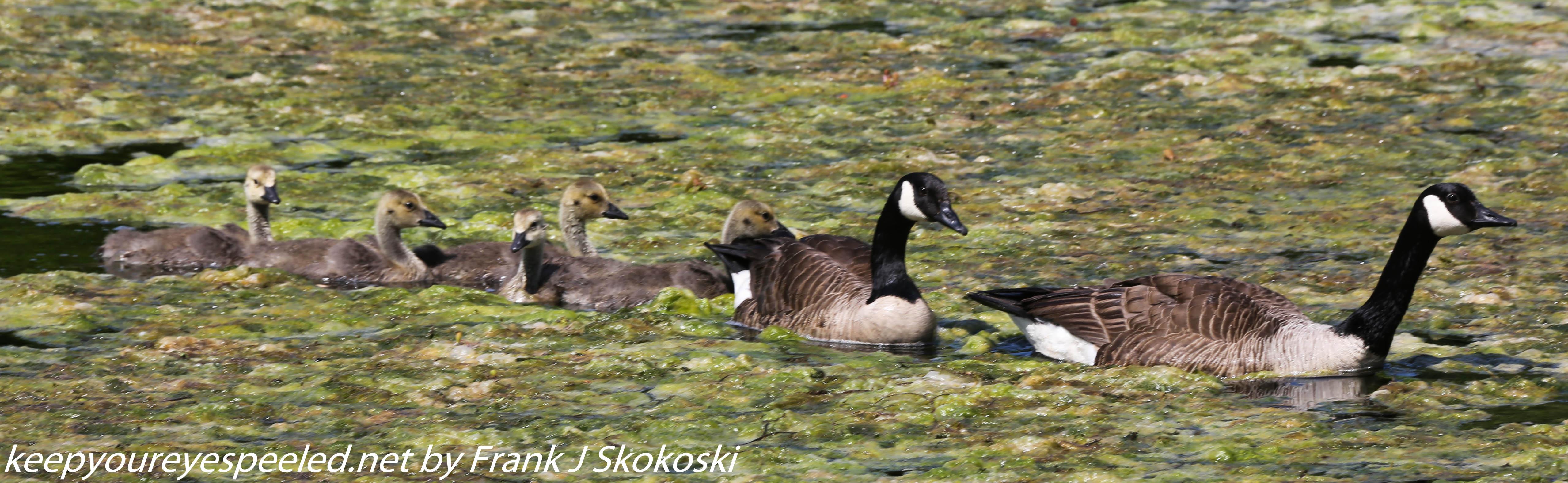 PPl Wetlands birds  (28 of 40)